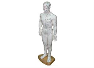 מודל גבר לדיקור